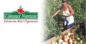 Coteaux Nantais(コトー・ナンテ)